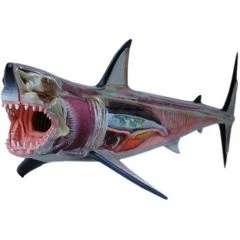 4D VISION ANIMAL DISSECTION NO. 02: GREAT WHITE SHARK ANATOMY MODEL (RE-RUN) Skynet