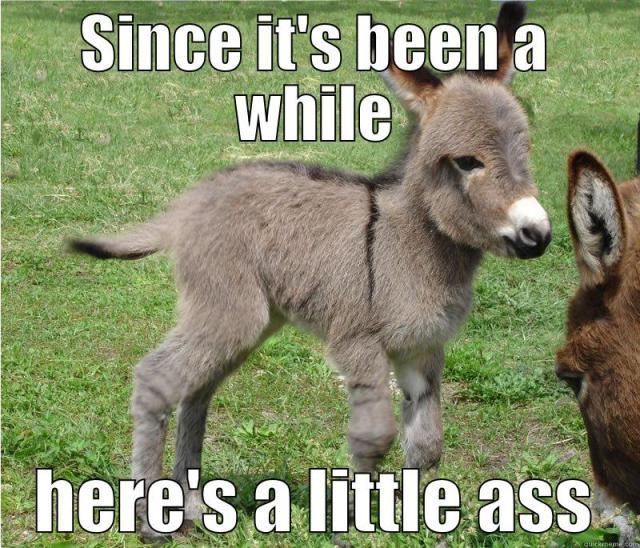 Little Ass Since Its Been A While Heres A Little Ass Misc