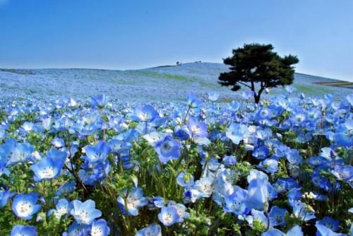 Хитачи парк – земята на цветята