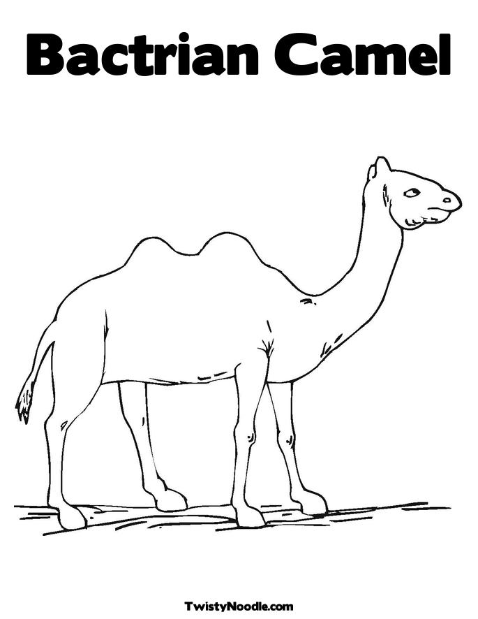 camel face coloring page the face of camel colouring pages page 2