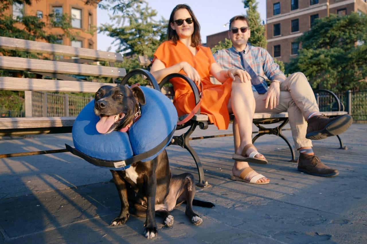 pet indulgers the cone of shame