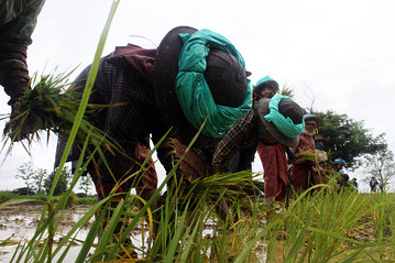 Myanmar's Rice Quality Win's Award over Thai Jasmine Rice