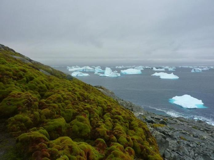 "Moss, as seen on this&nbsp;bank on Green Island in the Antarctic Peninsula,&nbsp;has been growing in the region at a dramatically faster rate in the past 50 years, according to a study&nbsp;<a href=""http://www.cell.com/current-biology/fulltext/S0960-9822(17)30478-5"" target=""_blank"">published</a> last week."