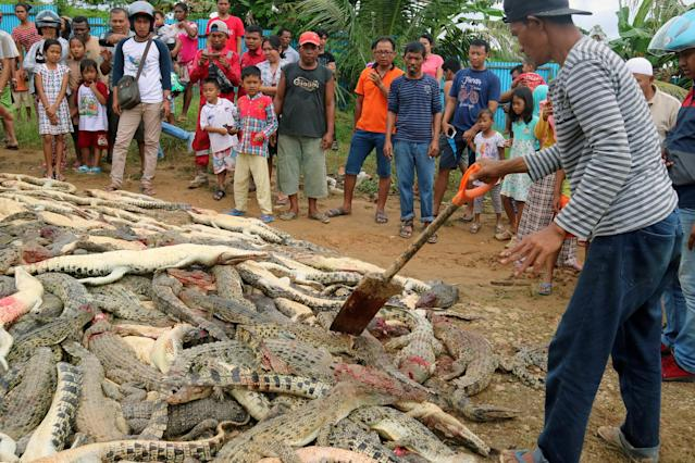 Local residents look at the carcasses of hundreds of crocodiles from a breeding farm after they were killed by angry locals following the death of a man who was killed in a crocodile attack in Sorong regency, West Papua, Indonesia July 14, 2018 in this photo taken by Antara Foto. Picture taken July 14, 2018 Antara Foto/Olha Mulalinda /via REUTERS
