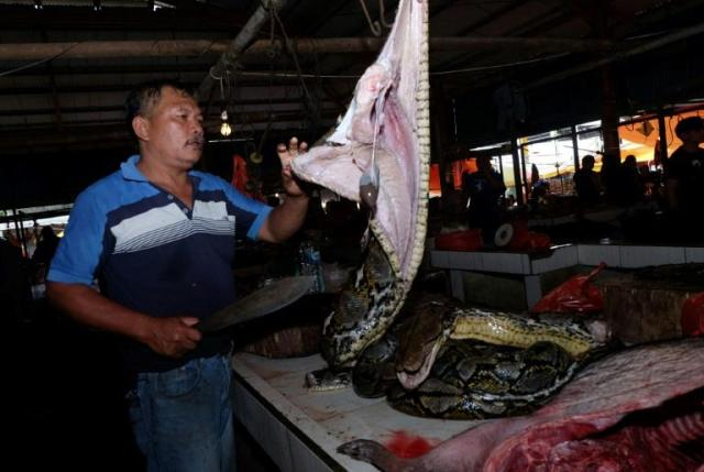 Stalls at the Tomohon Extreme Meat market on Sulawesi island feature a dizzying array of animals (AFP Photo/Ronny Adolof Buol)