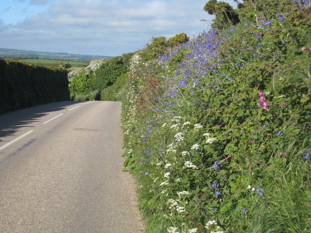 Hedgerow flowers alongside the B3283