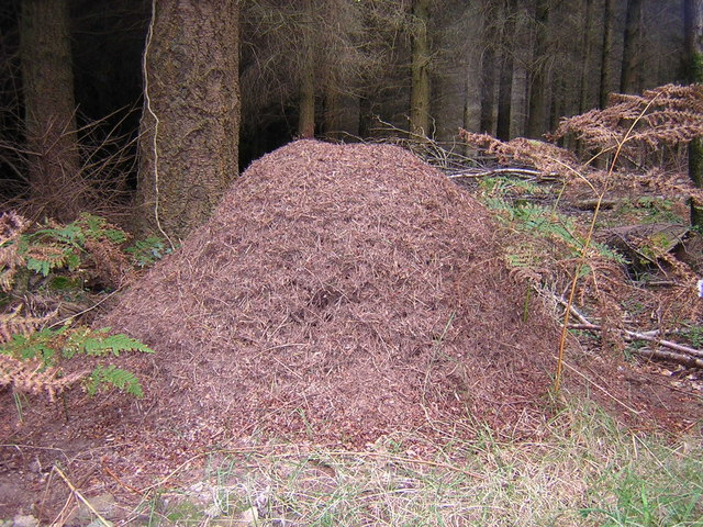An ant hill