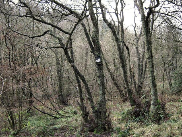 Image result for Lady Park Wood images