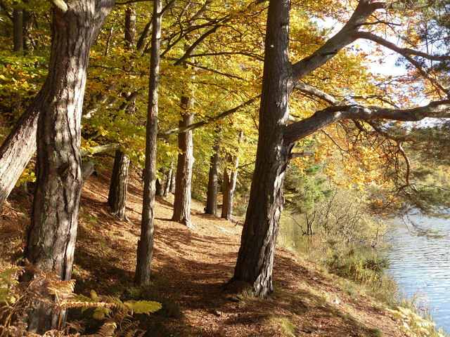 Image result for scotland october  trees