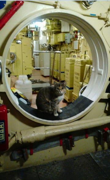 8223837 Коты на службе Отечества