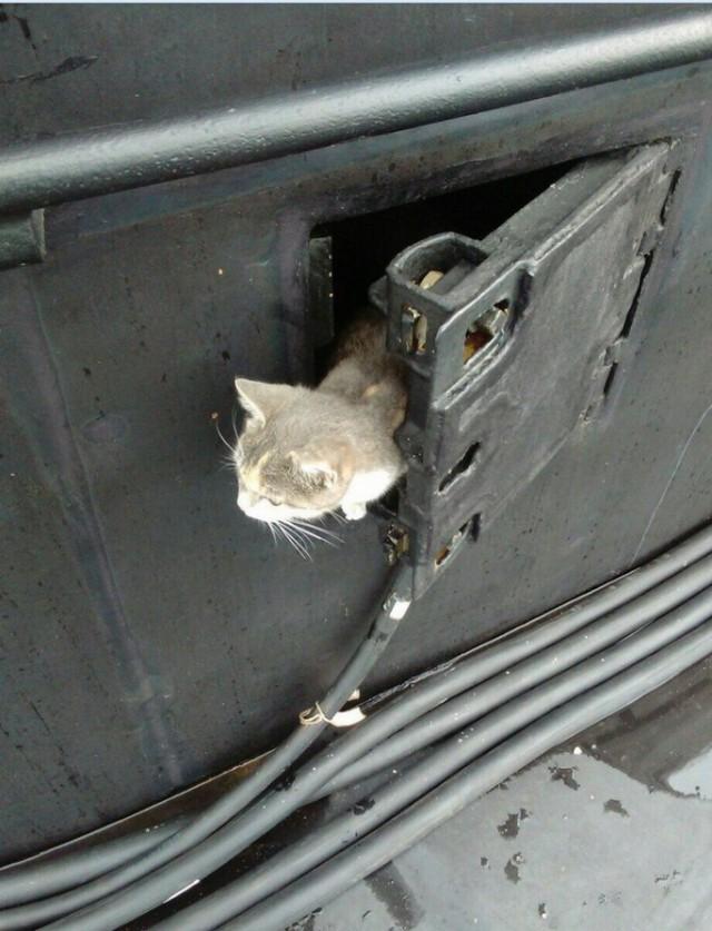 8223811 Коты на службе Отечества