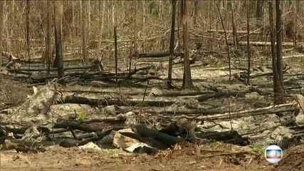 Alertas de desmatamento na Amazônia caem em julho, mas no ano dados são alarmantes