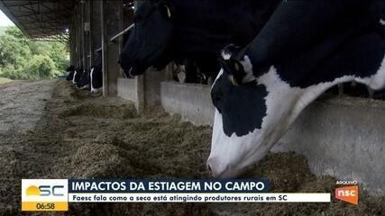 Impactos na estiagem: Faesc fala como a seca está atingindo produtores rurais em SC