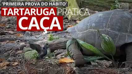VIDEO: Giant tortoise attacks baby swallow;  video evidences hunting practice