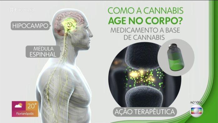 Cannabis como remédio: quais os riscos e benefícios da planta?