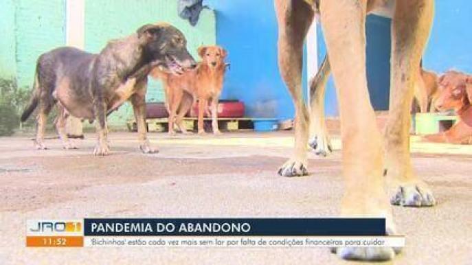 Animais abandonados estão em abrigo precisando de ajuda em Porto Velho