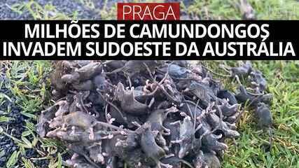 Video: Milhões de camundongos invadem a região sudoeste da Austrália