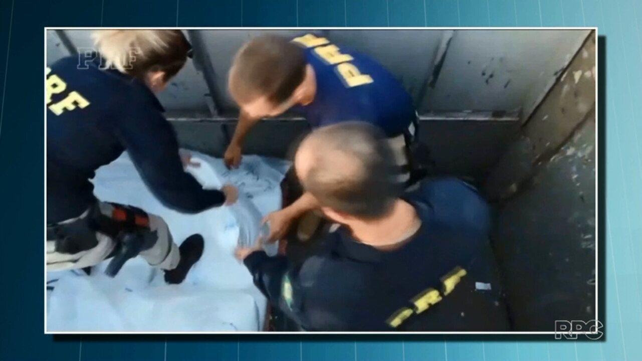 PRF apreende mais de 150 quilos de cocaína