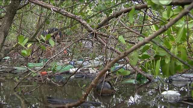 Pescadores fazem mutirão de limpeza em mangues para conseguir pescar, na PB | Paraíba | G1