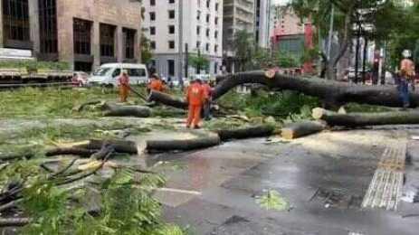 Trabalhadores da Prefeitura tentam remover árvore que desabou na Avenida Paulista, em SP