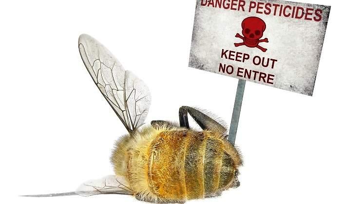 pesticidas-abeja-difunta.jpg