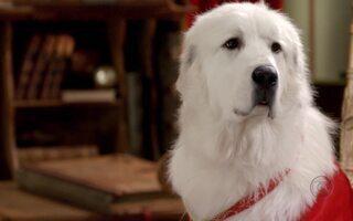 Globo exibe o filme Santa Buddies: Uma Aventura de Natal na Sessão da Tarde
