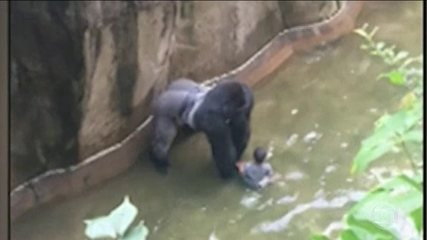 Action by guards who killed gorillas in the United States generates controversy
