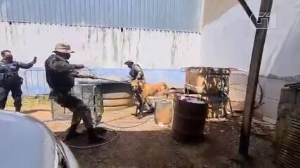 PMs resgatam lobo-guará em lava a jato no DF