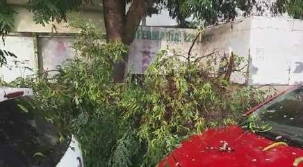 Chuva quebrou galhos de árvores que ficam na Rua Hugo Carneiro, bairro Bosque