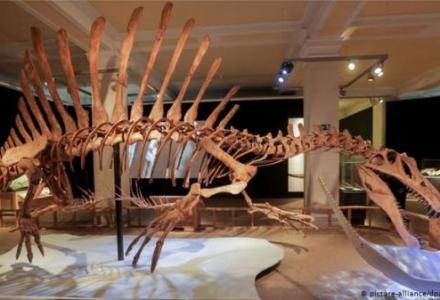 dinosaur_140414305 باحثون: هذا هو سبب انقراض الديناصورت قبل 66 مليون سنة Actualités