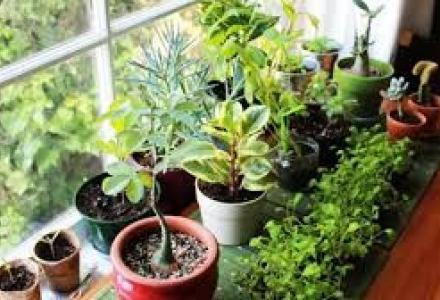 plates_159157390 أهم فوائد بعض النباتات المنزلية فلاحة
