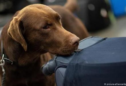 53958390_303_435816604 دراسة ألمانية: الكلاب تستطيع اكتشاف الإصابة بكورونا Actualités