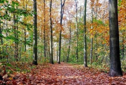 forest_leaves_750x542_266293740 خوفا من الإصابة بفيروس كورونا..عائلة روسية تغادر منزلها لتعيش في الغابة Actualités