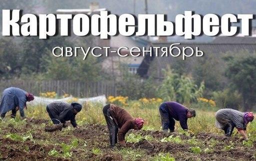Картинки по запросу смешные картинки про картошку