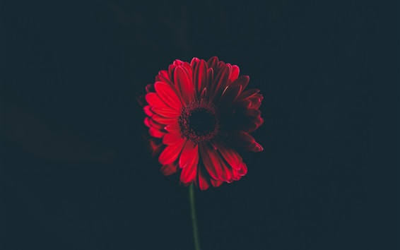 rouge fond sombre 3840x2160 uhd 4k