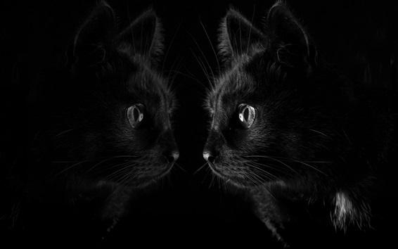chat noir regarder miroir fond noir