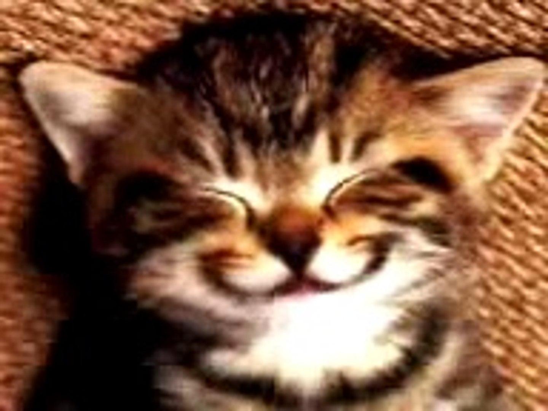 Cat Singing Happy Birthday Song Video Dailymotion