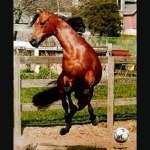 Cute And Funny Horses Video Dailymotion