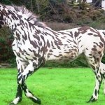 World S Rarest And Most Beautiful Horse Breeds Ever 2018 Video Dailymotion
