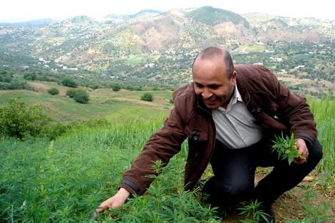 """""""الاستقلال"""" يطالب بالعفو عن مزراعي الكيف تأسيّاً بالرسول الكريم"""