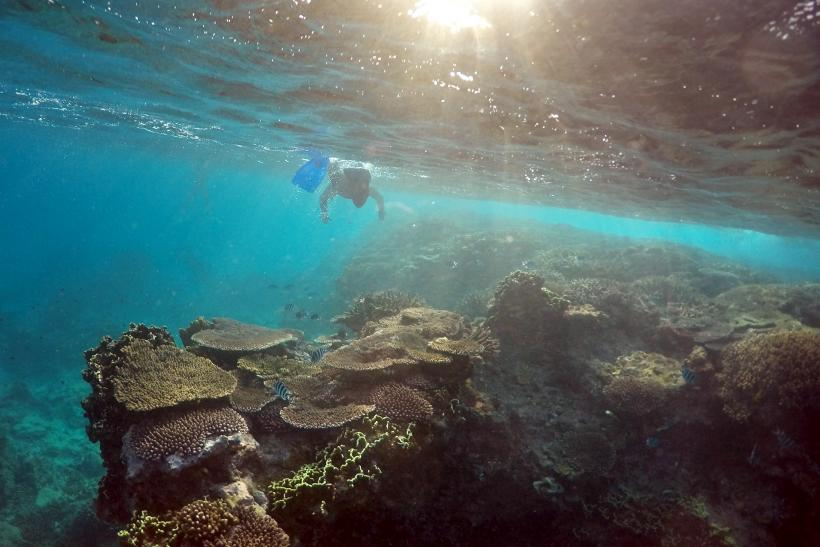 Image result for oil spill great barrier reef