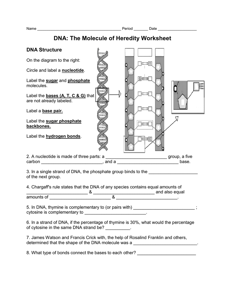 Worksheet Dna The Molecule Of Heredity Worksheet Key