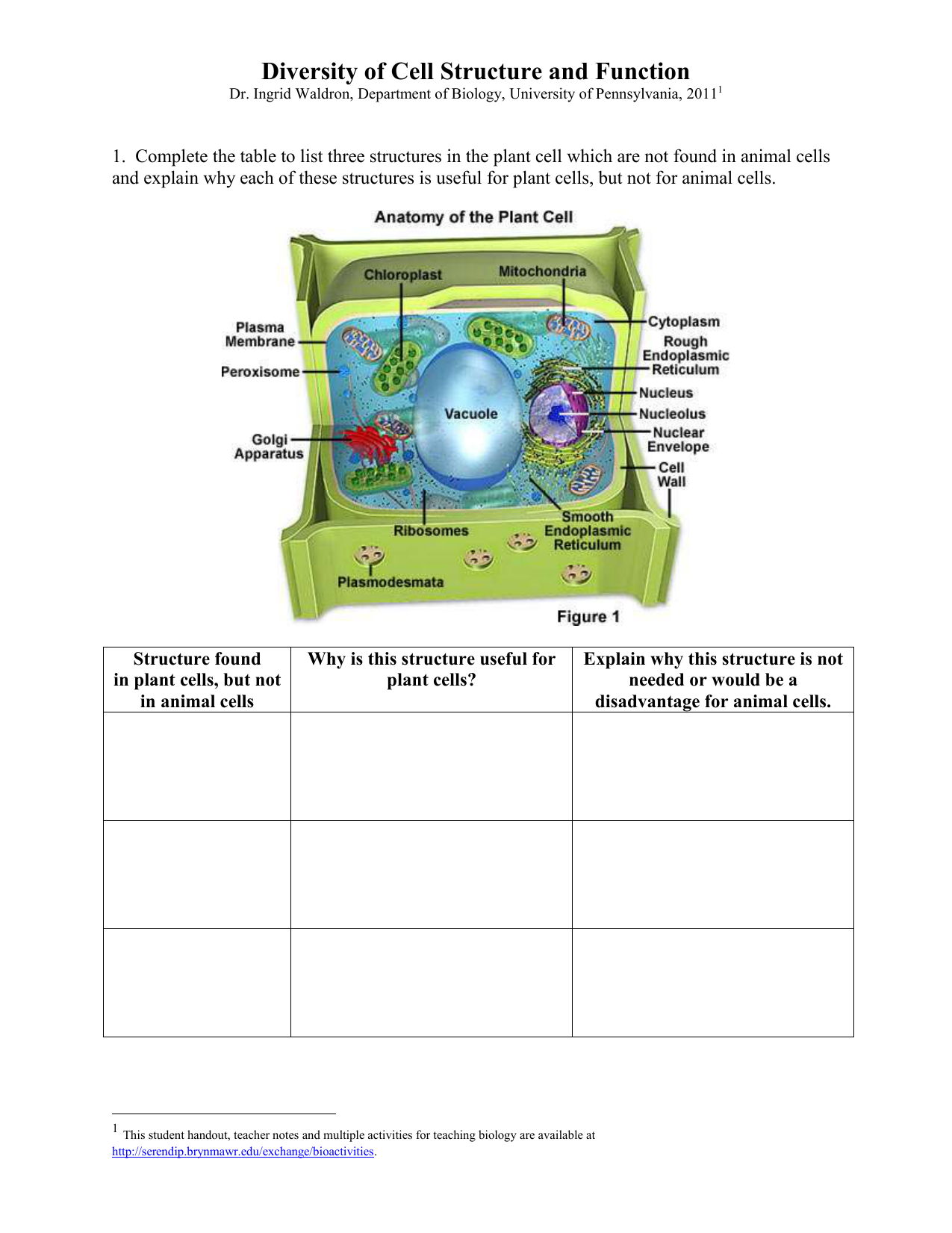 Atp Structure And Function Worksheet