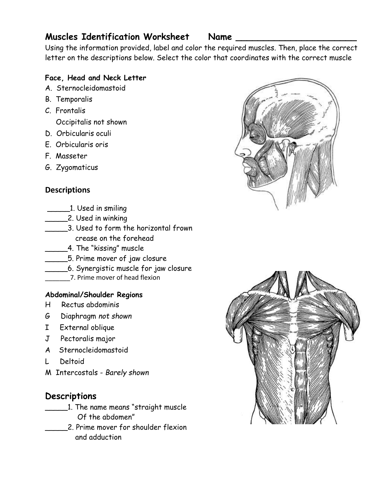 33 Label The Muscular System Worksheet