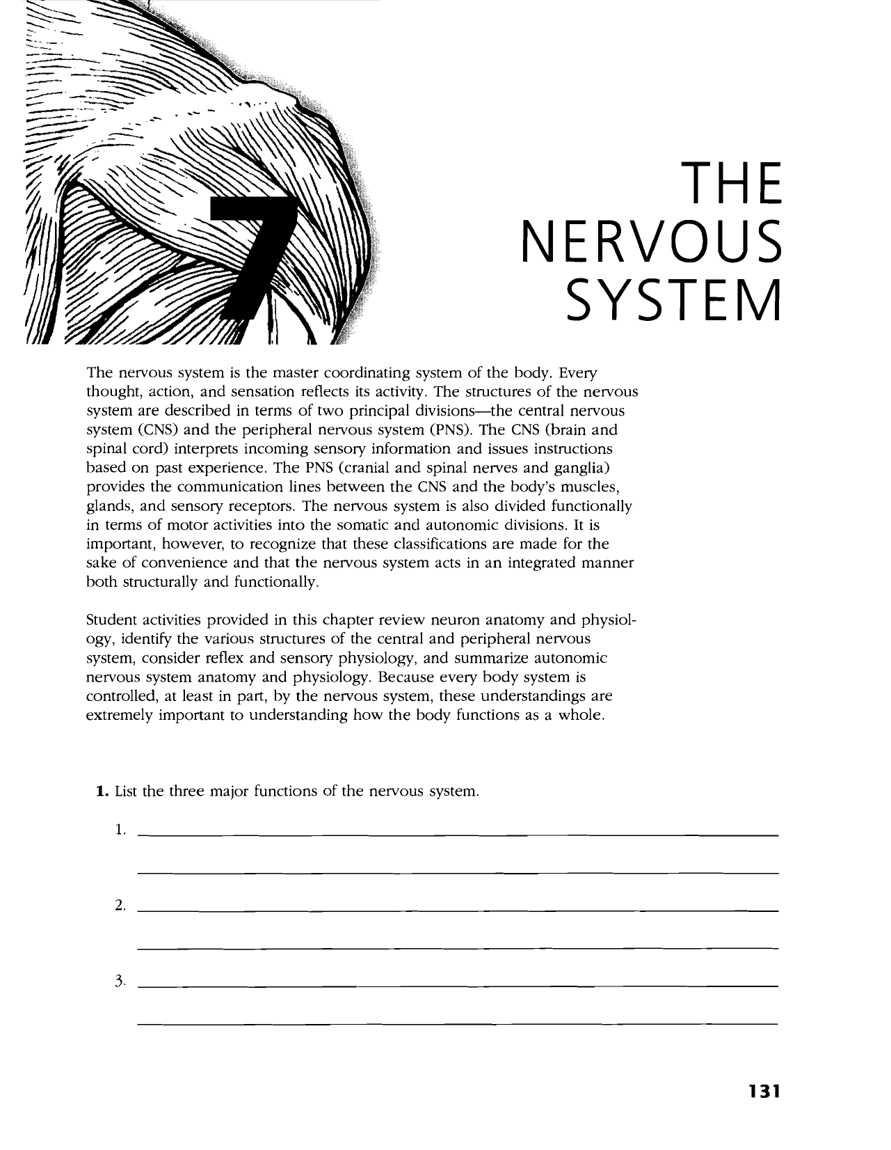 Human Anatomy And Physiology Nervous System Worksheet