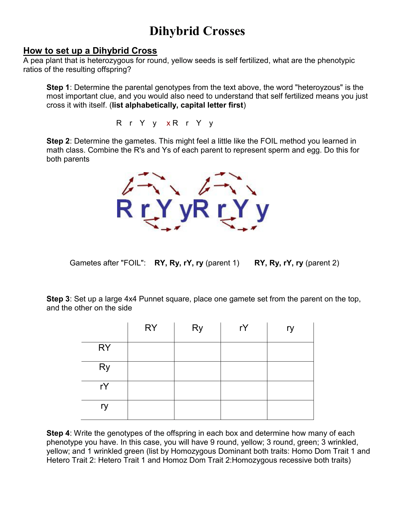 Worksheet Dihybrid Crosses Answer Key