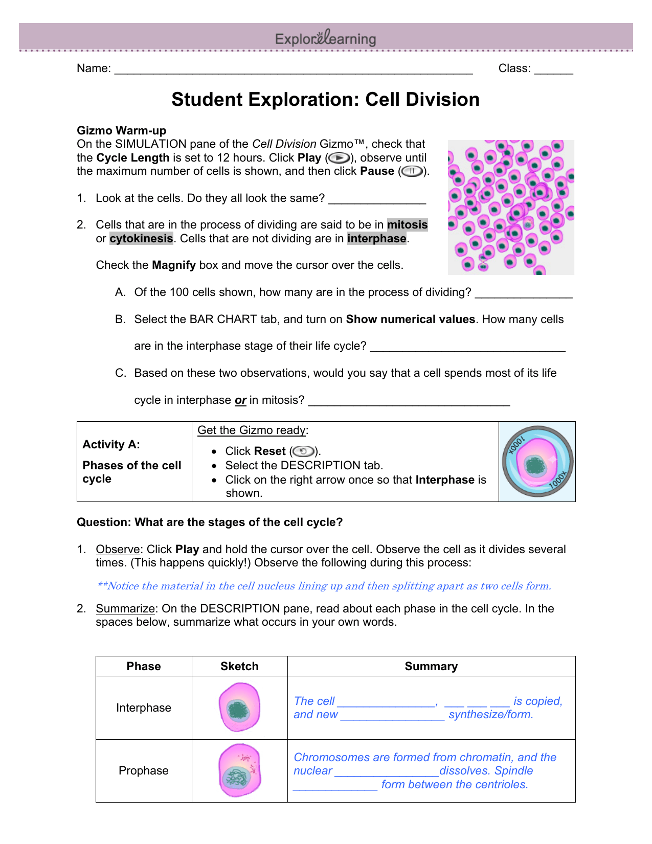 102 The Process Of Cell Division Worksheet Answer Key