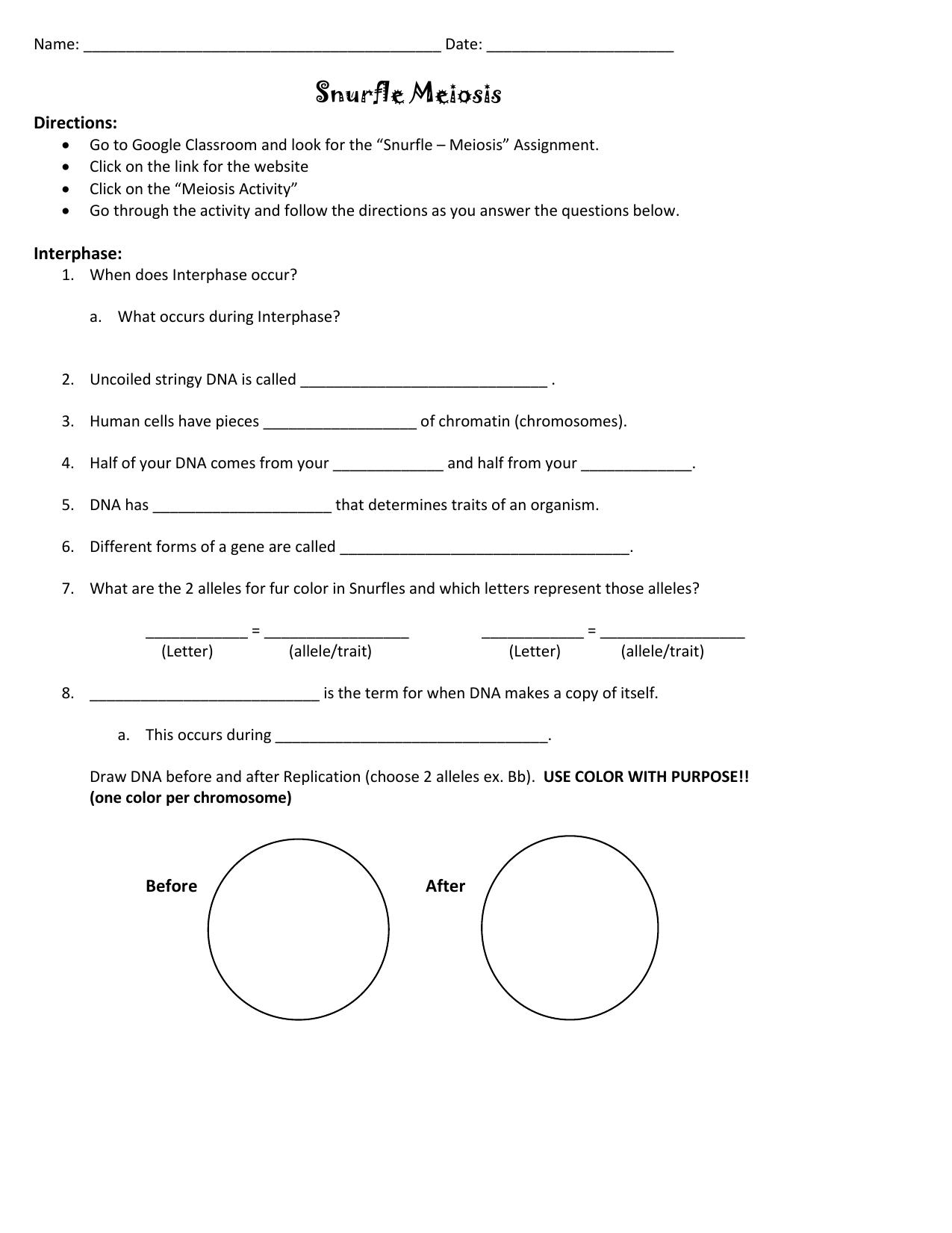 Snurfle Meiosis Worksheet Answers