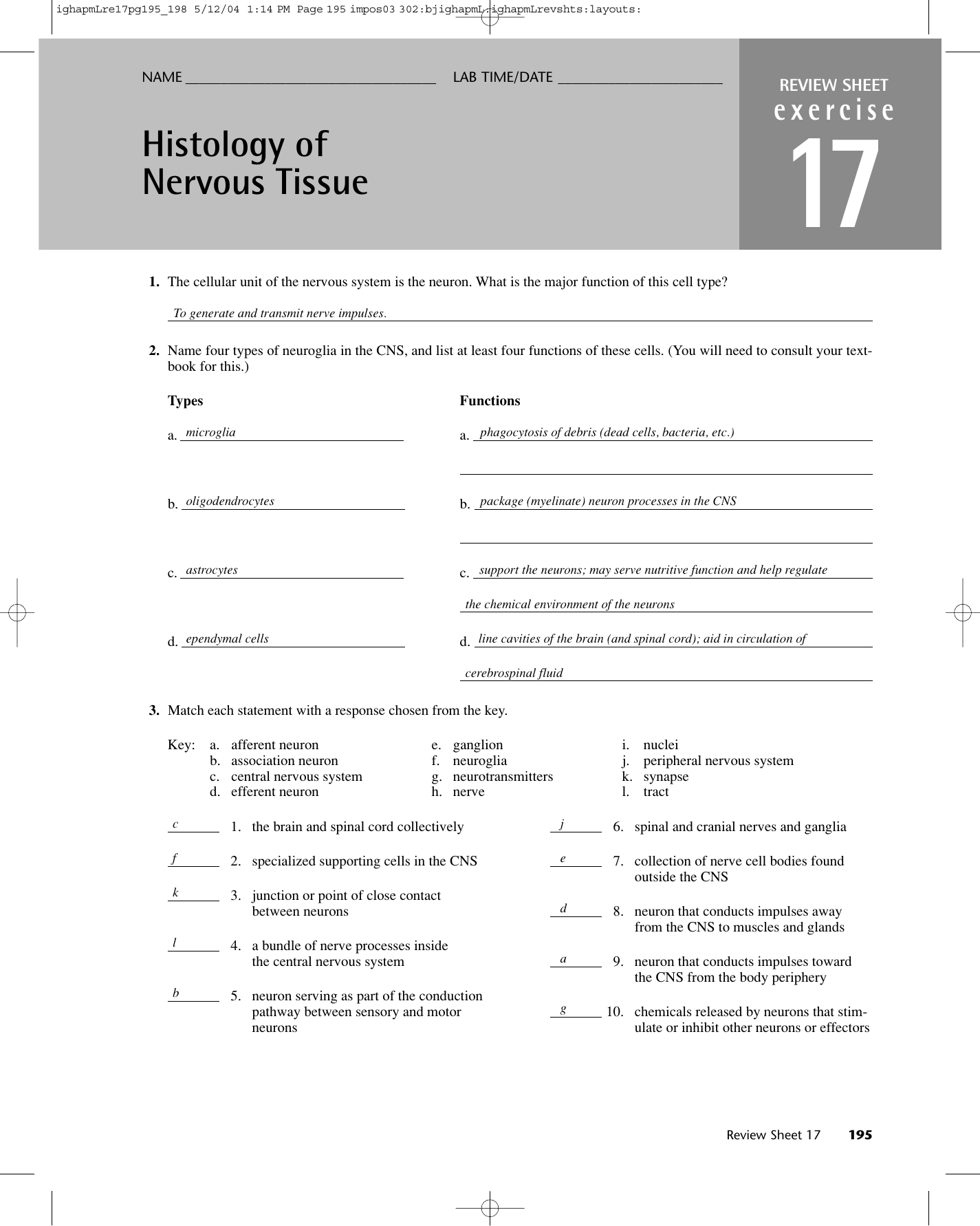 Neurons And Supporting Cells Worksheet