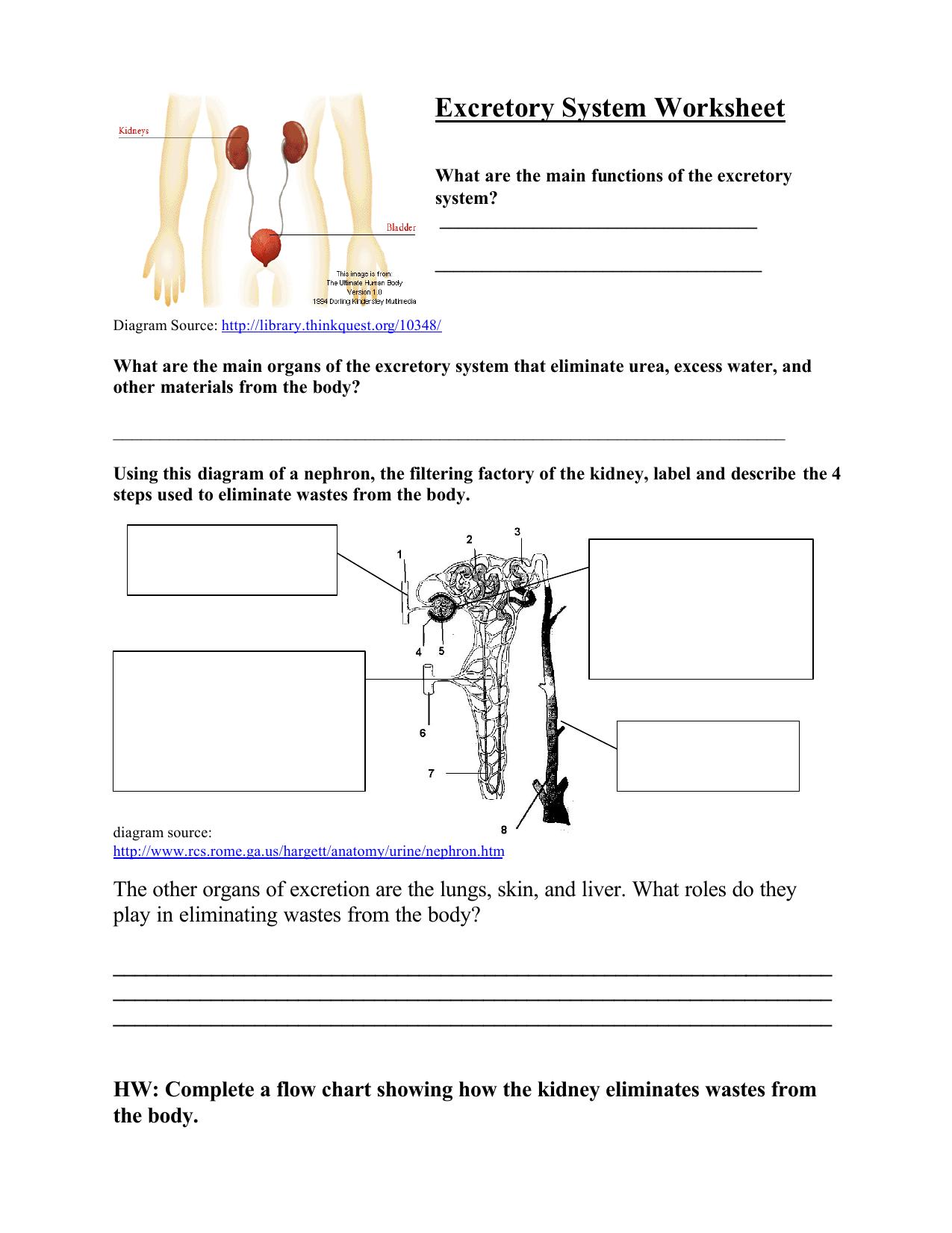 Excretory System Diagram